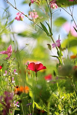 Blumenmeer     - p450m2004825 von Hanka Steidle