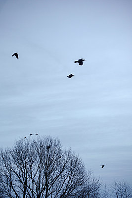 Vögel am Himmel - p946m956193 von Maren Becker
