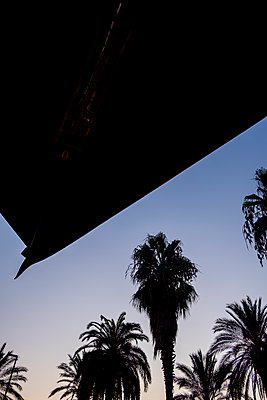 Palm trees at twilight against blue sky - p1057m2124788 by Stephen Shepherd