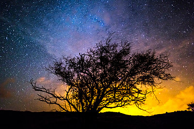 Silhouette of tree against night sky - p429m817221 by Adam Pass Photography