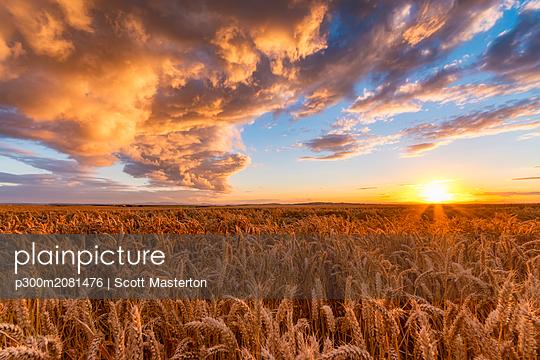 United Kingdom, East Lothian, wheat field at sunset - p300m2081476 by Scott Masterton