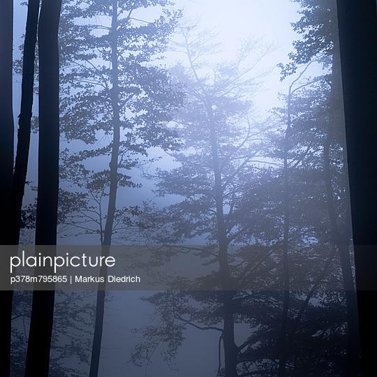 Trees in mist - p378m795865 by Markus Diedrich