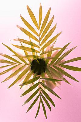 Palm fronds, Chamaedorea elegans - p1149m1558619 by Yvonne Röder