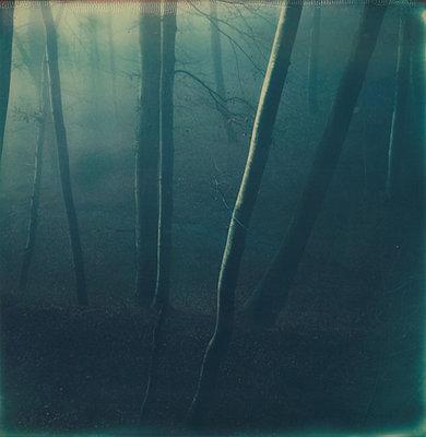Wald - p1421m1477005 von Simon Fröhlich