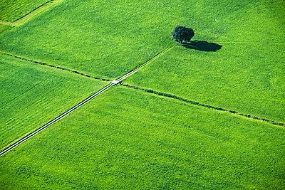 Austria, Salzburg State, meadows - p300m2060063 by Hans Mitterer