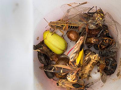 Insekten - p628m966159 von Franco Cozzo