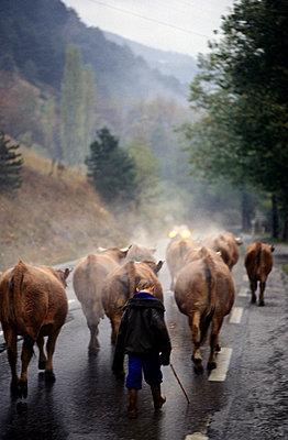 Viehwirtschaft bei Albertville, Frankreich - p2683512 von Andreas Zierhut