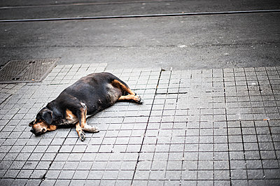 Dog on street - p1007m959849 by Tilby Vattard
