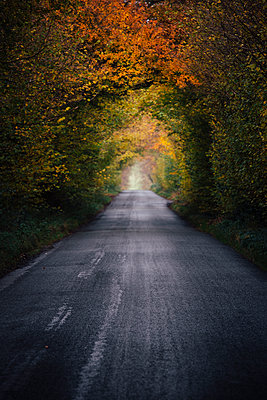 Straight road and trees with autumn foliage - p1057m1502830 by Stephen Shepherd