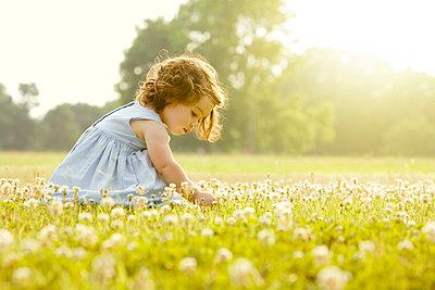 Caucasian girl picking flowers in field - p555m1478457 by John Fedele