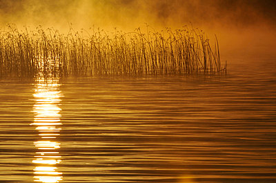 Golden sunset reflecting in lake - p5757070f by Mikael Svensson