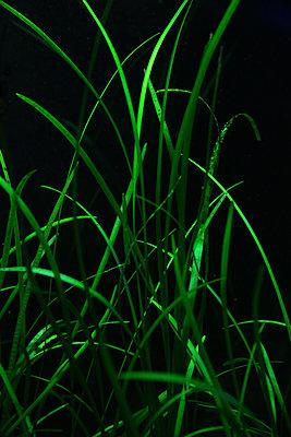 Gras  - p1330m1492267 von Caterina Rancho