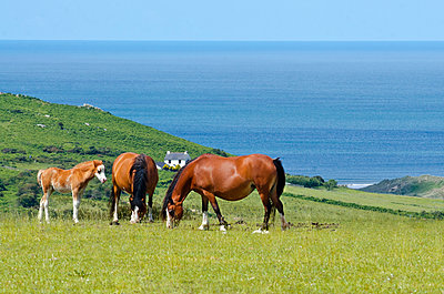 Horses by the sea - p1562m2288021 by chinch gryniewicz