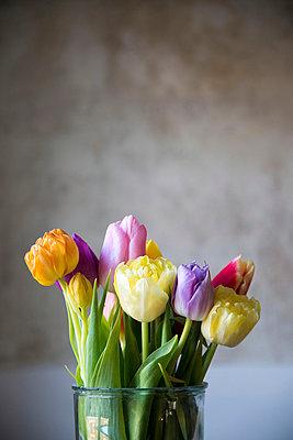 Bunte Tulpen - p161m904062 von Kerstin Schomburg