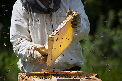Midsection of beekeeper brushing bees from frame of hive at farm - p301m1070126f by Halfdark
