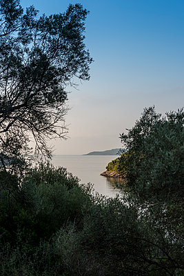 View of the open sea through trees and past headlands in the early morning light - p1433m1584187 by Wolf Kettler