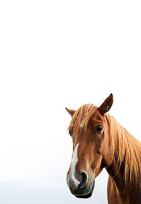 Fuchsfarbenes Pferd - p341m1488302 von Mikesch