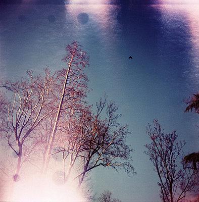 Drachen am Himmel - p9110148 von Arnaud Tudoret