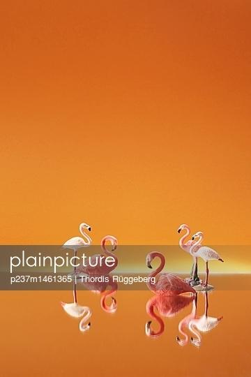 Miniatur Flamingos vor orangefarbenem Hintergrund - p237m1461365 von Thordis Rüggeberg