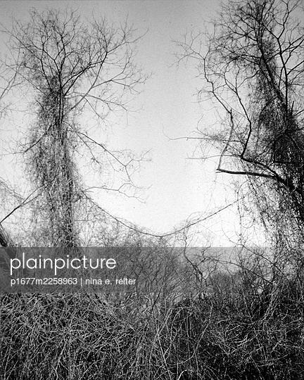 Overgrown trees - p1677m2258963 by nina e. reiter