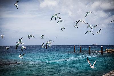 Möwen fliegen über Meer - p045m2020805 von Jasmin Sander