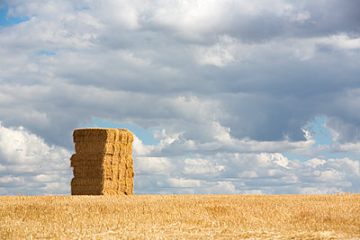 Ein großer Stapel Heuballen auf dem Feld - p1057m2008299 von Stephen Shepherd