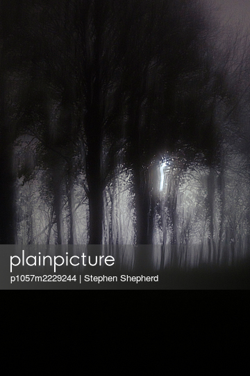 Fog in the forest - p1057m2229244 by Stephen Shepherd