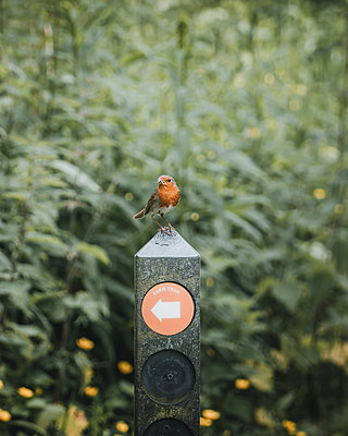 Singing bird perched on signpost - p1681m2283646 by Juan Alfonso Solis