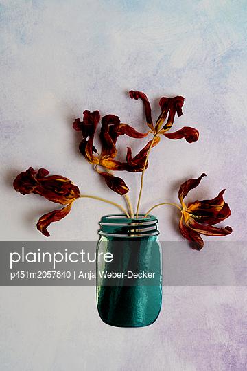Vertrocknete Tulpen im Einmachglas - p451m2057840 von Anja Weber-Decker