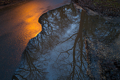 Reflection of trees in roadside puddle - p1023m2208277 by Tom Merton