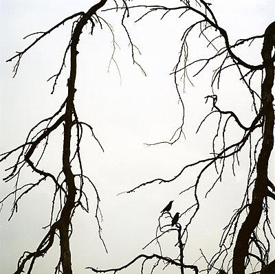 Zwei Vögel im toten Baum - p1231m1051526 von Iris Loonen