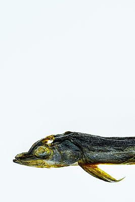 Trockenfisch, Kleine Maränen, Osmerus Eperlanus,  - p1275m2210233 von cgimanufaktur