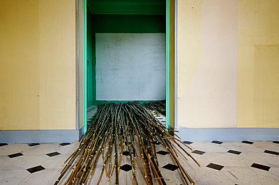 Gestrüpp im Zimmer - p567m1469188 von Ernesto Timor