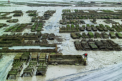 Worker tending rows of oyster beds on beach mudflats, Saint-Malo, Brittany, France - p924m1506716 by WALTER ZERLA