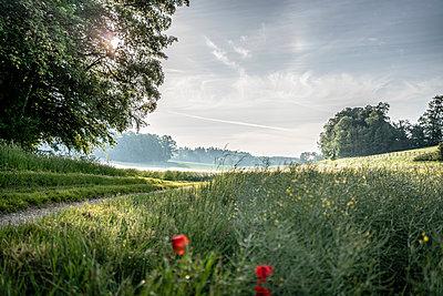 Farm track alongside meadow at sunrise, Bavaria - p1437m2260681 by Achim Bunz