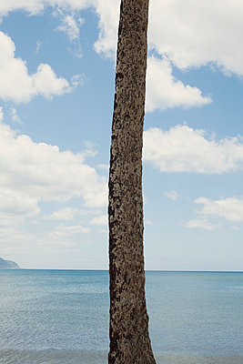 Palm tree trunk, Hawaii - p495m1034279 by Jeanene Scott