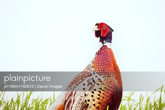 p1166m1163512 von Cavan Images