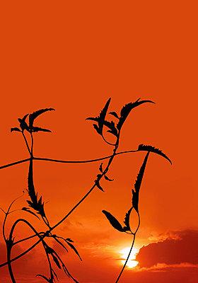 Romantisch - p4500185 von Hanka Steidle