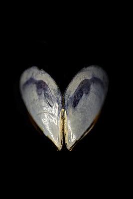 Mussel close-up - p1235m2056936 by Karoliina Norontaus
