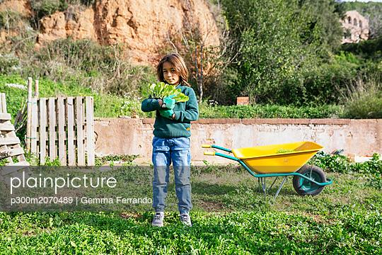 Boy holding lettuce seedlings in a vegetable garden - p300m2070489 by Gemma Ferrando