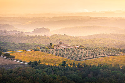 Vineyards during autumn near Gaiole in Chianti, Florence province, Tuscany, Italy - p651m2085153 by Stefano Termanini
