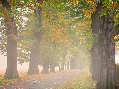 Alley on a foggy morning - p974m661481 by Volker Banken