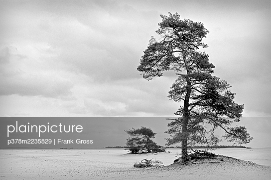 Two trees in a sandy landscape - p378m2235829 by Frank Gross