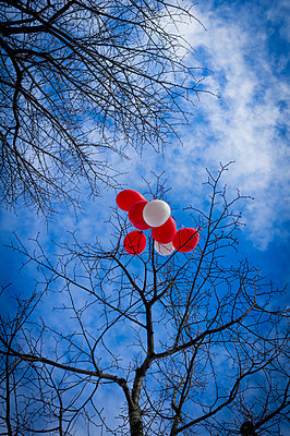 A bunch of red and white balloons caught in  the bare branches of a tree, blue sky  - p1403m1482631 by Photofusion