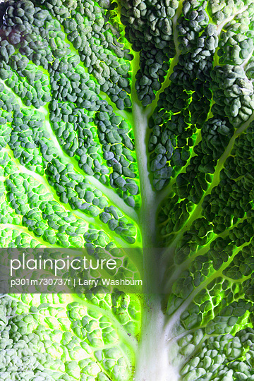 Leaf of Savoy cabbage, full frame - p301m730737f by Larry Washburn