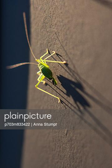 Grasshopper - p703m833422 by Anna Stumpf