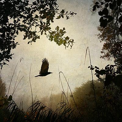The First Morning - p1633m2209075 von Bernd Webler