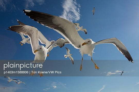 p1403m1588806 von Ton Koene/VW Pics