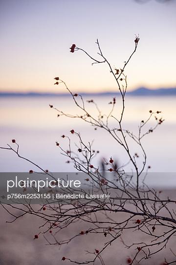 Busch mit roten Beeren am Seeufer, Lake Tahoe, Kalifornien - p756m2253155 von Bénédicte Lassalle