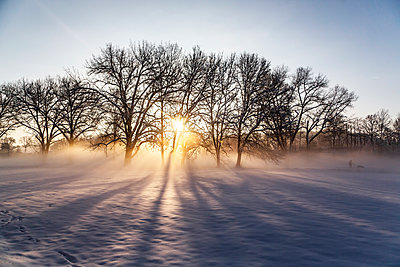 Germany, Landshut, foggy landscape in winter at sunrise - p300m2083928 by Sandra Roesch